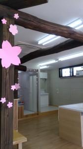 店内装飾・桜