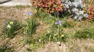 大袋営業所前のお花