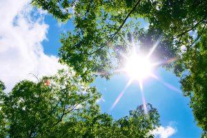 tree-woods_00023